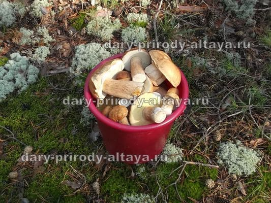 Сбор грибов - фото
