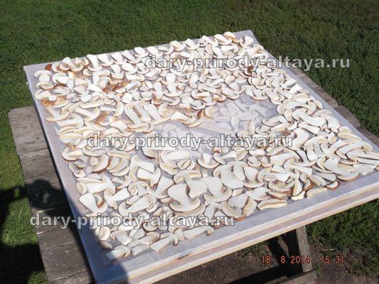 Раскладка нарезанных грибов - фото