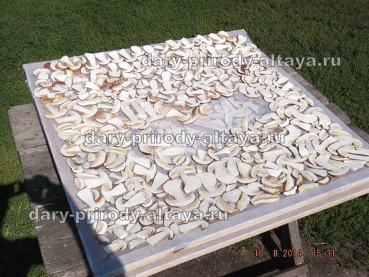 Перевозка грибов - фото